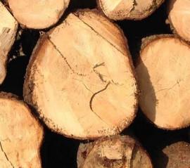 Holz ist genial